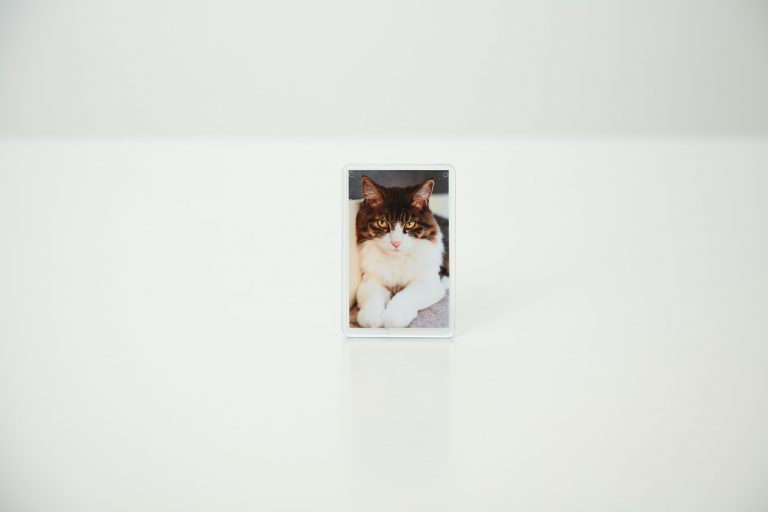 Cat fridge magnet
